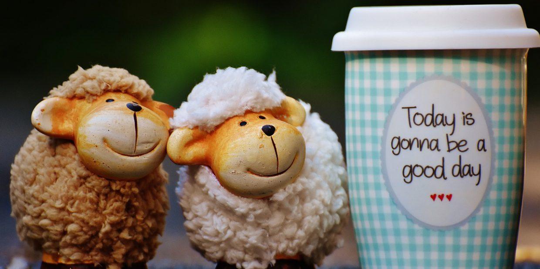 sheep-1644144_1280